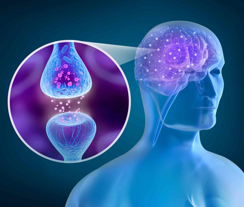 Brain and Neuron